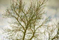 Γυμνοί κλάδοι δέντρων στην αντανάκλαση του νερού Στοκ Εικόνες