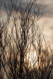 Γυμνοί κλάδοι δέντρων στον ήλιο αυγής Στοκ εικόνα με δικαίωμα ελεύθερης χρήσης