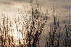Γυμνοί κλάδοι δέντρων στον ήλιο αυγής Στοκ φωτογραφίες με δικαίωμα ελεύθερης χρήσης