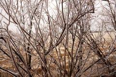 Γυμνοί κλάδοι ενός δέντρου που ντύνεται στον πάγο Στοκ φωτογραφία με δικαίωμα ελεύθερης χρήσης