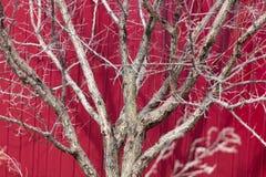 Γυμνοί κλάδοι ενός δέντρου σε ένα κλίμα ενός φράκτη Στοκ φωτογραφίες με δικαίωμα ελεύθερης χρήσης