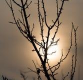 Γυμνοί κλάδοι ενός δέντρου στην ανατολή Στοκ εικόνα με δικαίωμα ελεύθερης χρήσης