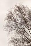 Γυμνοί κλάδοι ενός δέντρου στην ανατολή Στοκ Εικόνες