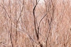 Γυμνοί κλάδοι ενός δέντρου στη φύση Στοκ Φωτογραφία