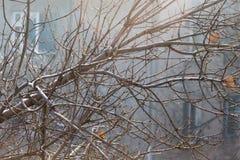 Γυμνοί κλάδοι ενός δέντρου στη φύση Στοκ Εικόνες