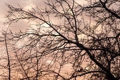 Γυμνοί κλάδοι ενός δέντρου στο ηλιοβασίλεμα Στοκ φωτογραφίες με δικαίωμα ελεύθερης χρήσης