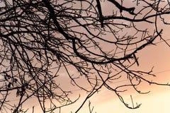 Γυμνοί κλάδοι ενός δέντρου στο ηλιοβασίλεμα Στοκ Φωτογραφία