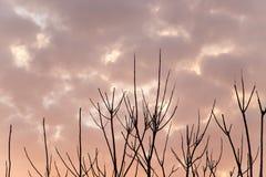 Γυμνοί κλάδοι ενός δέντρου στο ηλιοβασίλεμα Στοκ εικόνες με δικαίωμα ελεύθερης χρήσης