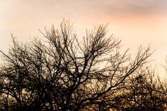 Γυμνοί κλάδοι ενός δέντρου στο ηλιοβασίλεμα Στοκ Φωτογραφίες