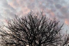 Γυμνοί κλάδοι ενός δέντρου στο ηλιοβασίλεμα Στοκ φωτογραφία με δικαίωμα ελεύθερης χρήσης