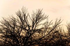 Γυμνοί κλάδοι ενός δέντρου στο ηλιοβασίλεμα Στοκ εικόνα με δικαίωμα ελεύθερης χρήσης