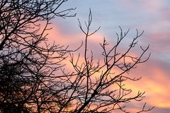 Γυμνοί κλάδοι ενός δέντρου στο ηλιοβασίλεμα Στοκ Εικόνες