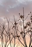 Γυμνοί κλάδοι ενός δέντρου στο ηλιοβασίλεμα Στοκ Εικόνα