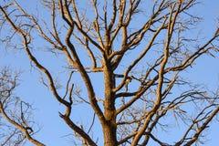 Γυμνοί κλάδοι ενός δέντρου Κλάδοι χωρίς φύλλα ενάντια στο μπλε ουρανό Στοκ φωτογραφία με δικαίωμα ελεύθερης χρήσης
