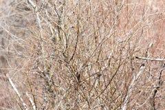 Γυμνοί κλάδοι ενός δέντρου Στοκ Εικόνα