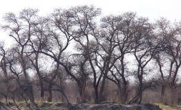 Γυμνοί κλάδοι ενός δέντρου Στοκ Φωτογραφίες