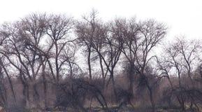 Γυμνοί κλάδοι ενός δέντρου Στοκ Εικόνες