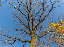 Γυμνοί κλάδοι ενός δέντρου Στοκ εικόνες με δικαίωμα ελεύθερης χρήσης