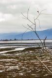 Γυμνοί κλάδοι ιτιών ενάντια στους μουτζουρωμένους υγρότοπους Kerkini λιμνών Στοκ εικόνα με δικαίωμα ελεύθερης χρήσης