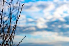 Γυμνοί κλάδοι στο νεφελώδη ουρανό Στοκ Φωτογραφίες