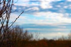 Γυμνοί κλάδοι στο νεφελώδη ουρανό Στοκ φωτογραφία με δικαίωμα ελεύθερης χρήσης