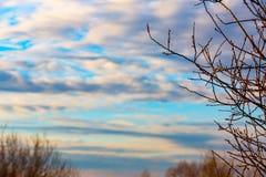 Γυμνοί κλάδοι στο νεφελώδη ουρανό Στοκ Εικόνα