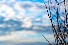 Γυμνοί κλάδοι στο νεφελώδη ουρανό Στοκ εικόνες με δικαίωμα ελεύθερης χρήσης