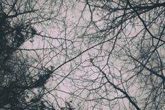 Γυμνοί κλάδοι το χειμώνα Στοκ εικόνα με δικαίωμα ελεύθερης χρήσης