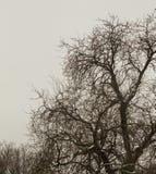 Γυμνοί κλάδοι το χειμώνα Στοκ Εικόνες