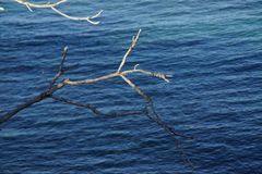 Γυμνοί κλάδοι χωρίς φύλλα φύλλων επάνω από τη θάλασσα Μπροστινή άποψη - Crète Στοκ Εικόνα