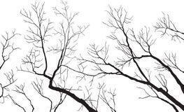 γυμνοί κλάδοι Στοκ εικόνες με δικαίωμα ελεύθερης χρήσης