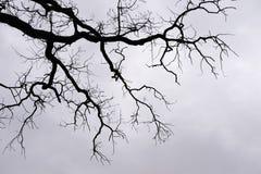 γυμνοί κλάδοι Στοκ φωτογραφίες με δικαίωμα ελεύθερης χρήσης