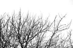 Γυμνοί κλάδοι δέντρων σε έναν άσπρο ουρανό Στοκ εικόνα με δικαίωμα ελεύθερης χρήσης