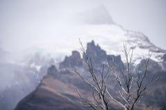 Γυμνοί κλάδοι δέντρων στα βουνά Shevelev Στοκ Φωτογραφίες