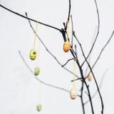 Γυμνοί κλάδοι με τα ζωηρόχρωμα αυγά διακοσμήσεων Πάσχας Στοκ Εικόνες