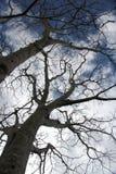 Γυμνοί κλάδοι το χειμώνα Στοκ φωτογραφία με δικαίωμα ελεύθερης χρήσης