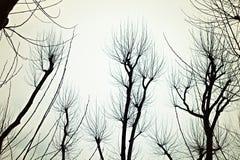 Γυμνοί κλάδοι των δέντρων Στοκ Εικόνες