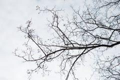 γυμνοί κλάδοι Στοκ φωτογραφία με δικαίωμα ελεύθερης χρήσης