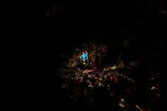 γυμνοσάλιαγκας θάλασσας Στοκ Εικόνα