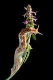 Γυμνοσάλιαγκας που γλιστρά στα λουλούδια στοκ εικόνα