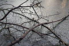 Γυμνός κλάδος παγωμένο σε παγωμένο Στοκ εικόνες με δικαίωμα ελεύθερης χρήσης