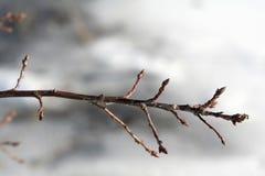 γυμνός κλαδίσκος Στοκ φωτογραφίες με δικαίωμα ελεύθερης χρήσης