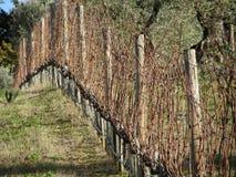Γυμνός τομέας αμπελώνων το χειμώνα Ιταλία Τοσκάνη Στοκ Εικόνες