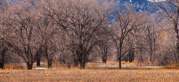 γυμνός χειμώνας δέντρων λι&be Στοκ Φωτογραφία
