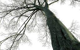 γυμνό δέντρο κλάδων Στοκ εικόνες με δικαίωμα ελεύθερης χρήσης