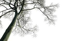 γυμνό δέντρο κλάδων Στοκ Φωτογραφία