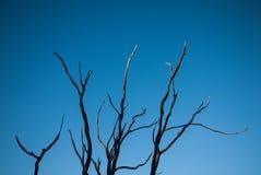 γυμνό δέντρο κλάδων Στοκ Εικόνα