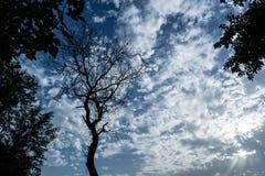 Γυμνό δέντρο πέρα από τις ακτίνες ήλιων που εκπέμπουν το νεφελώδη ουρανό Στοκ Φωτογραφία