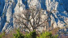 Γυμνό δέντρο στο γκρίζο υπόβαθρο βουνών Στοκ Εικόνες