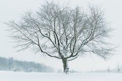 Γυμνό δέντρο στο χιονισμένο τομέα Στοκ Φωτογραφία